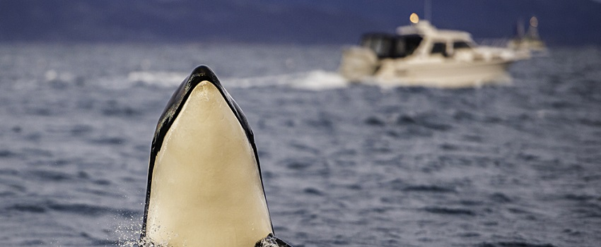 whale watching norway